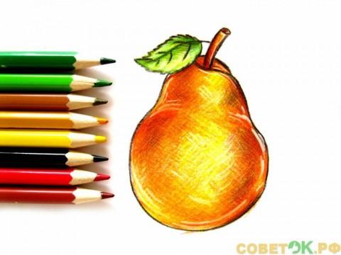 Как поэтапно нарисовать грушу