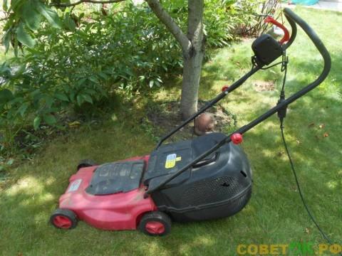 Как правильно ухаживать и подстригать газон