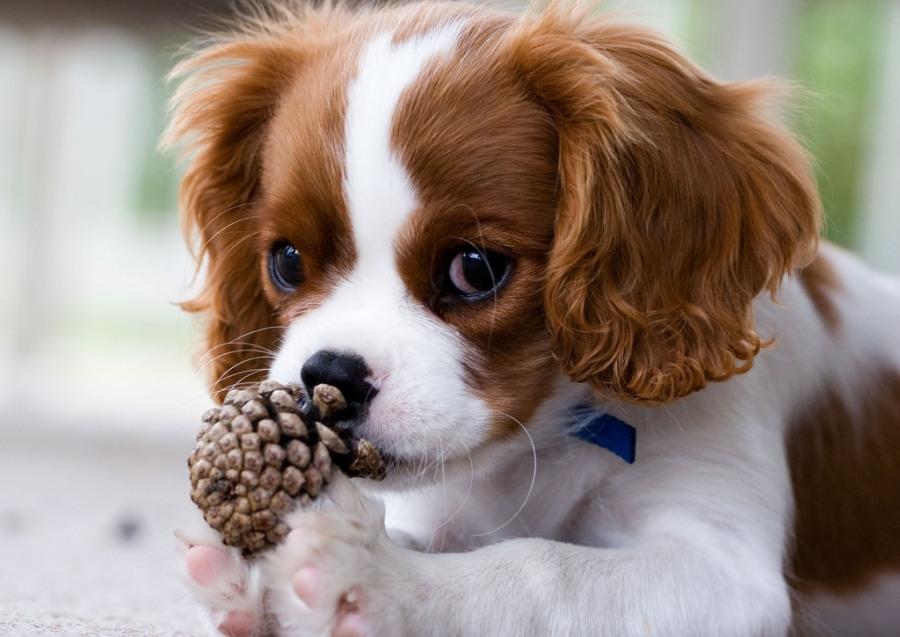 Для начинающих любителей собаководов